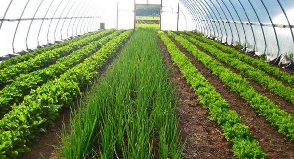 теплица для зимнего выращивания зелени