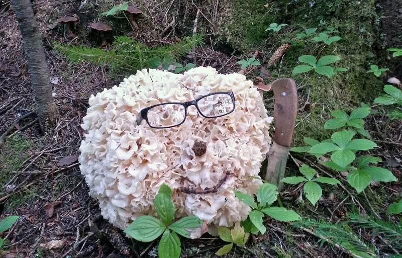 Где растет гриб баран и как его готовить?