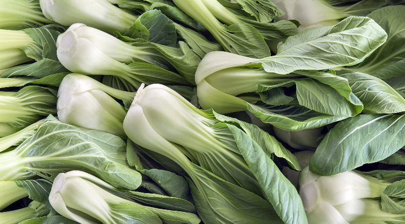 Китайская капуста бок чой: описание и полезные свойства
