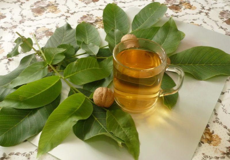 Чем полезны и вредны листья грецкого ореха