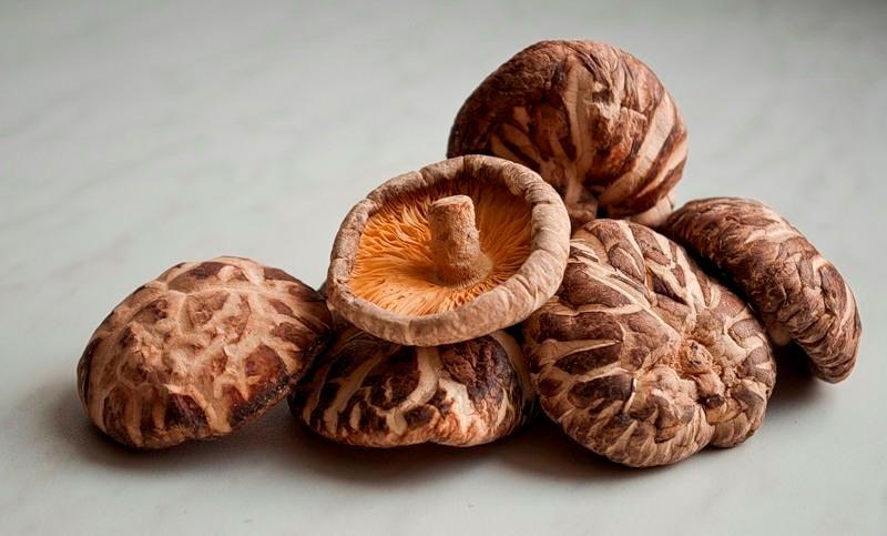 Что такое грибы шиитаке