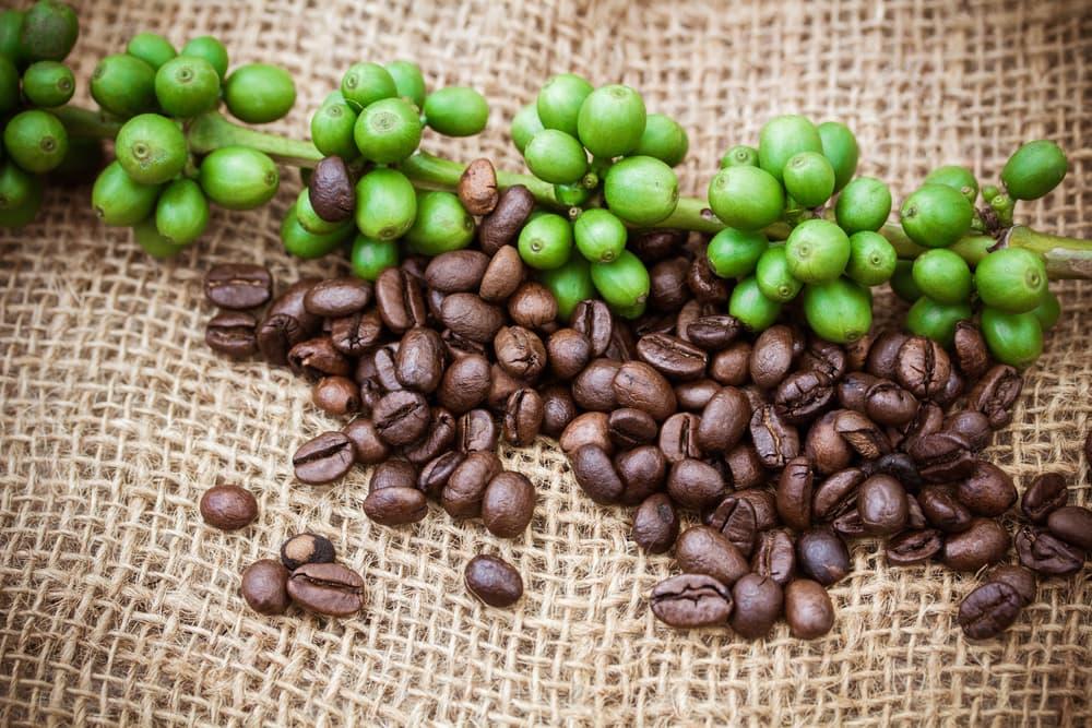 Кофейное дерево из семени
