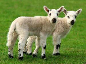 Тест: Что вы знаете о клонировании?