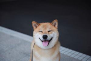 Тест: Соедините улыбку и глаза пса
