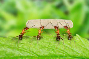 Тест на знание насекомых и не только