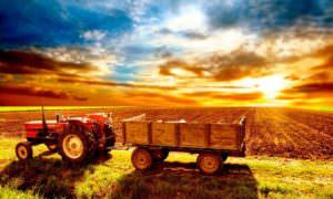 Тест: Какая вы сельхозкультура?