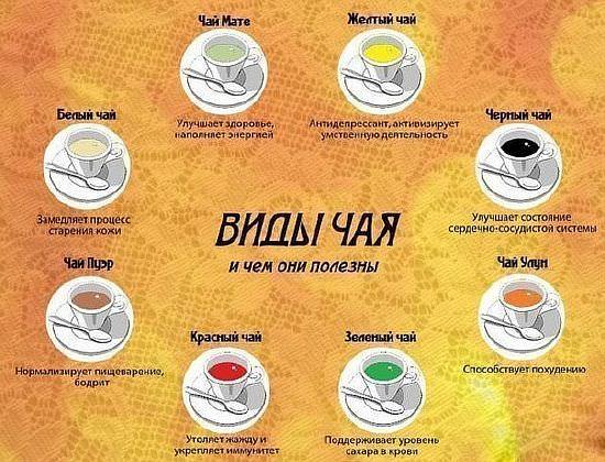 полезные и вредные свойства чая